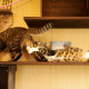 cats, cat, animals, house wallpaper