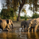 elephant, animals, watering-place, watering, family wallpaper