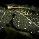 water drops, leaves, nature wallpaper