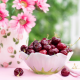 vase, flowers, bowl, berry, cherry, food wallpaper
