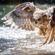 takeoff, wings, owl, water, bokeh, spray, birds, animals wallpaper