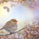 bird, branche, leaves, collage, spider, robin, robin redbreast, european robin wallpaper