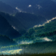 landscape, nature, Carpathians, mountain, mist, forest, spring, green, trees wallpaper