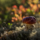 nature, moss, mushroom wallpaper