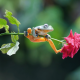 flower, rose, stem, frog, animals wallpaper