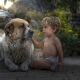 child, boy, baby, dog, friends, animals wallpaper