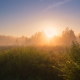 summer, meadow, dawn, fog, sun, honey dew, nature wallpaper