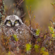 birds, owl, tree, branches, moss, animals wallpaper