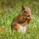 animals, squirrel, nature, grass wallpaper