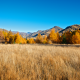 tree, mountains, clear sky, sky, field, nature, autumn wallpaper
