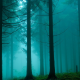 forest, tree, mist, fog, morning wallpaper