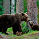 animals, bears, bear cub, cub, forest, tree wallpaper