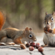 acorns, autumn, animals, squirrel wallpaper