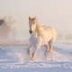 horse, snow, leap, winter, snow dust, animals wallpaper