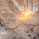 nature, branches, snow, winter, sun, frost wallpaper