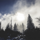 trees, forest, fog, clouds wallpaper
