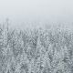 trees, snow, winter, frest, pine wallpaper