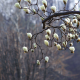 magnolia, flowers, korea, spring, nature wallpaper