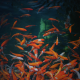 fish, aquarium, golden fish, splashing wallpaper