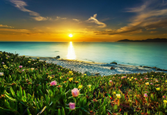 landscape, nature, beach, sunset, clouds, sea, sky, flowers, water wallpaper
