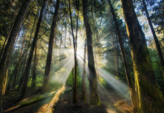 landscape, nature, sun rays, forest, sunrise, trees, mist, shrubs wallpaper