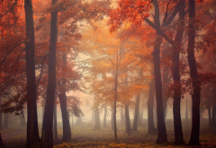 nature, landscape, mist, trees, fall, leaves, red, park, morning, sunrise wallpaper