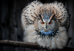 owl, animals, bird, feather wallpaper