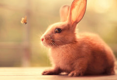 rabbit, butterfly, animals, nature, insect wallpaper