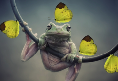 frog, butterfly, animals, nature, closeup, amphibians, insect wallpaper