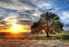 hdr, texas, usa, nature, sunrise, sunset, clouds, tree wallpaper