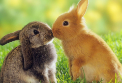 rabbits, grass, animals, cute wallpaper