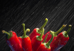 water, macro, pepper, rain, food wallpaper