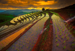 rice paddy, terraces, sky, Thailand, sunrise, mountains, field, water, nature, landscape wallpaper