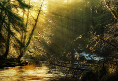 sun rays, nature, forest, river, sunlight, tree wallpaper