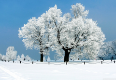 snow, winter, tree, nature wallpaper