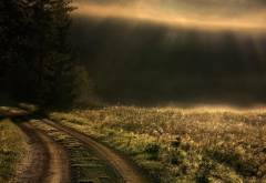 sunrise, mist, roads, path, trees, grass, sun rays, landscapes, nature wallpaper