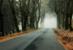 tree, forest, nature, branch, leaf, fog, road, fall, hill wallpaper