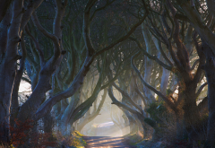 Ireland, nature, fairy tale, road, alley, tree, mist, sun rays wallpaper