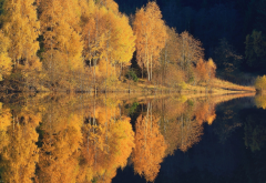 nature, lake, forest, autumn, water, reflection, tree, calm wallpaper