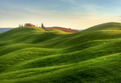 tuscany, italy, nature, hill, grass wallpaper