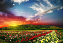 nature, landscape, sunset, clouds, flowers wallpaper