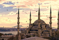 Hagia Sophia, Mosque, Turkey, seagull, bird, clouds wallpaper