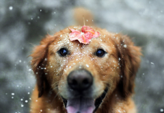 dog, animals, snow, leaf wallpaper