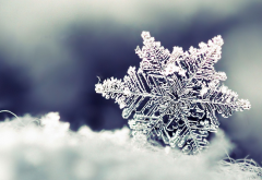 snowflake, winter, closeup, macro, snow, christmas wallpaper