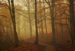 nature, path, fall, fog, forest, leaves, tree, autumn, leaf wallpaper