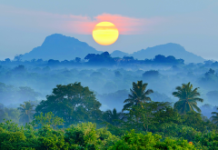 sri lanka, jungle, mountains, nature, mist, fog, sunset, forest, palm trees, tropical wallpaper
