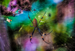 spider, net, animals, macro, nature, spider wallpaper