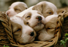 animals, dog, puppy, baby animals, basket wallpaper