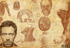 men, artwork, Dr. House, actors, Gregory House, Hugh Laurie, faces, skulls, bones, muscles, brain wallpaper