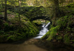black forest, germany, river, bridge, stream, moss, forest, nature wallpaper